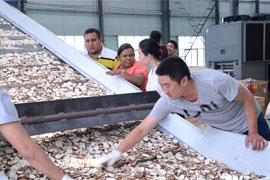 make the test for cassava drying machine