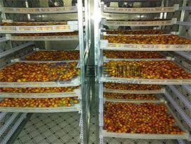 Apricot & Plum dryer machine