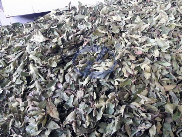 Bay leaf dryer put into use in Syria