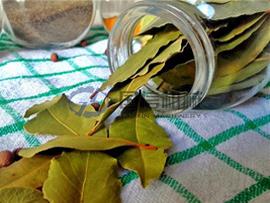 Bay leaf dryer
