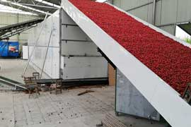 Continuous chilli dryer