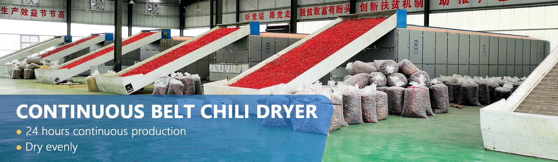 continuous belt chili dryers
