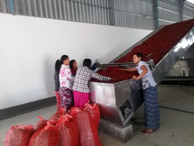 Red chili drying,Red pepper drying production line