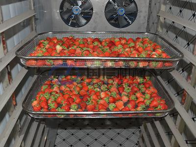 Berries Drying Machine