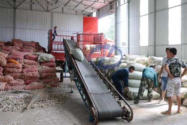Dehydrated garlic processing
