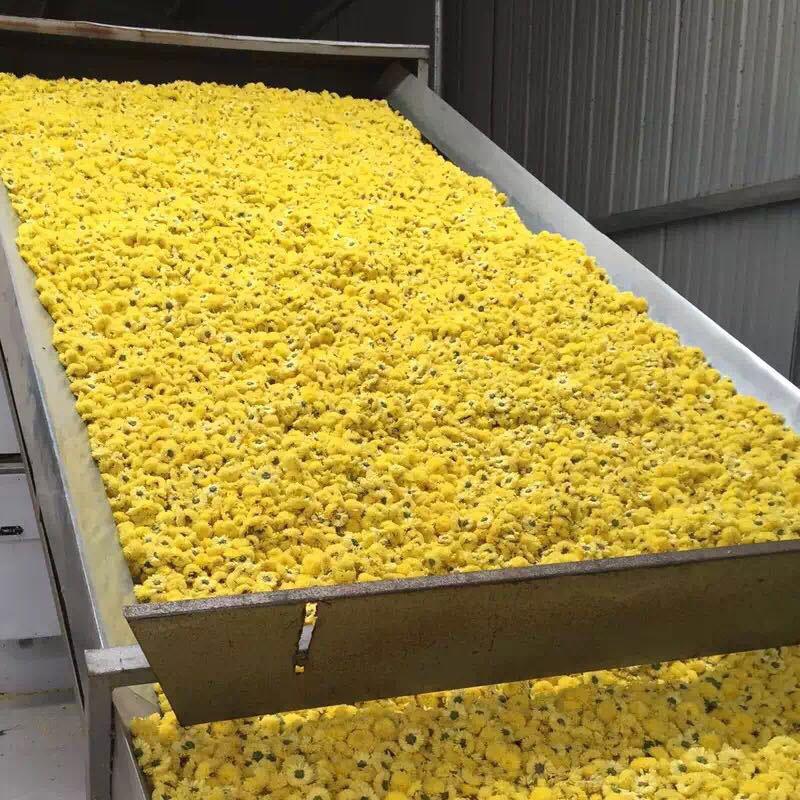 Chrysanthemum Drying Machine